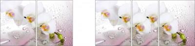 Фотопечать Орхидея Розовая