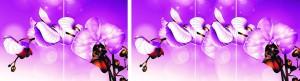 Орхидея Виолет R047